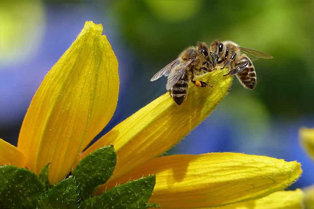 Hjälpa bin och humlor som hobby